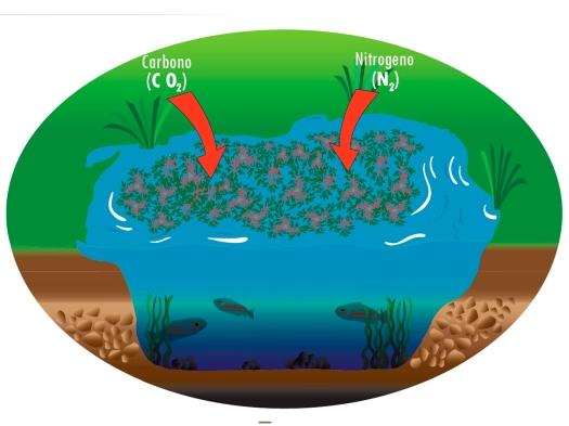 Sumidero de Carbono