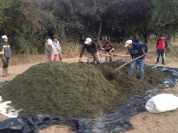 Preparacion de bocashi de Azolla entre Pampa La Villa y Chorrillos